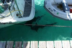 Sharks, don't swim here!