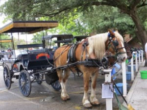 Charleston Carriage Ride